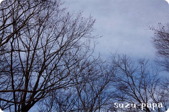出会いの森の空