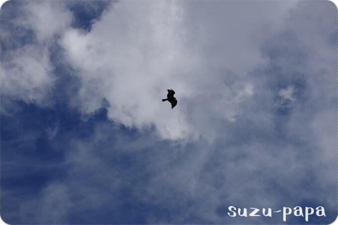 日光湯元キャンプ場 鳥