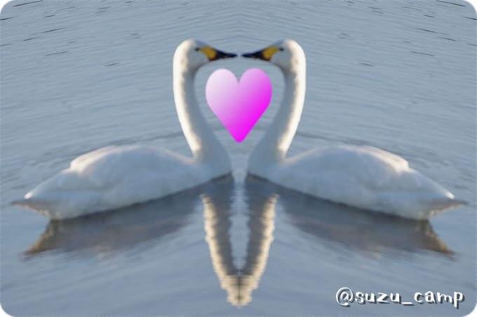 ハート白鳥