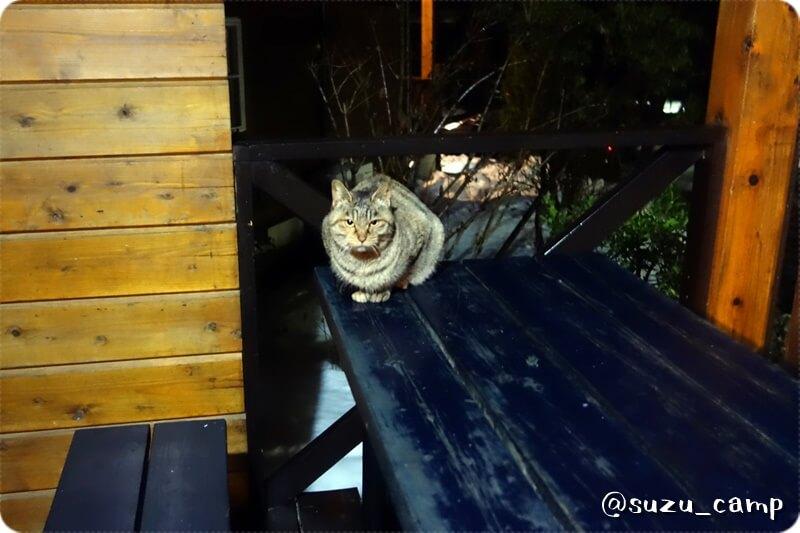 メープル那須高原キャンプグランド 猫